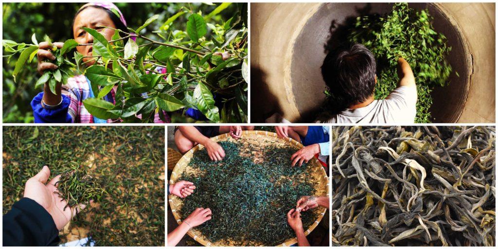 Мао Ча, что означает «чай-сырец» – основной этап производства пуэра