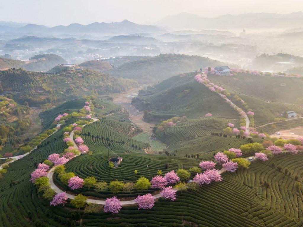 Чайное путешествие по Китаю