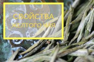 svojstva zheltogo 300x200 - Свойства желтого чая